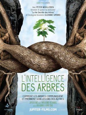 L'intelligence des arbres / Guido Tolke et Julia Dordel (réal)   Tolke, Guido. Metteur en scène ou réalisateur. Scénariste